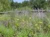 igreen_wildflowers1